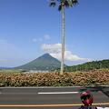 写真: 100516-53やしの木と開聞岳
