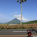 Photos: 100516-53やしの木と開聞岳