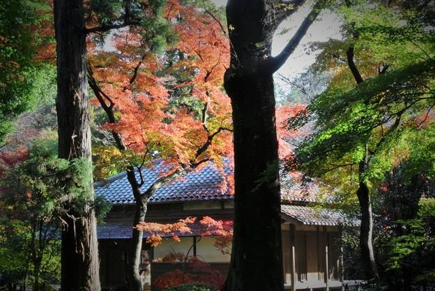 写真: 秋色(埼玉県 平林寺編)