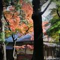 秋色(埼玉県 平林寺編)