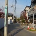 写真: 本土寺@松戸DSC08832