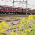 Photos: 菜の花と鮮魚列車