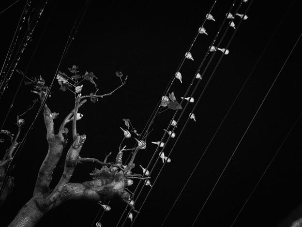 Photos: 鳥2