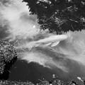 雲と樹を泳ぐ