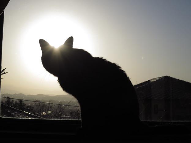 写真: 後光が・・・・・