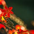 写真: 姫の色