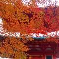 Photos: 多宝塔の秋
