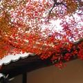 写真: 古刹・僧堂の秋