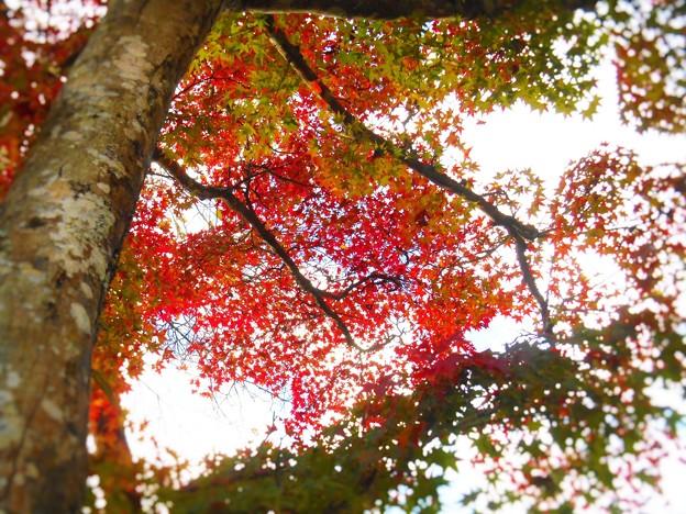 Photos: 備後路・佛通寺の秋