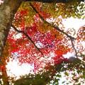 写真: 備後路・佛通寺の秋