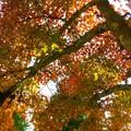 Photos: 備後路の秋