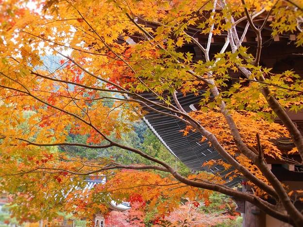 Photos: 古刹・法堂の秋