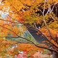 写真: 古刹・法堂の秋