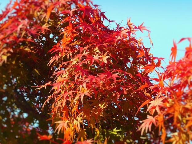 瀬戸内海諸島の秋