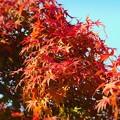 写真: 瀬戸内海諸島の秋