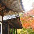 写真: 備後路の秋 開山堂の屋根の上から睨みを利かす鬼瓦