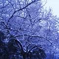 Photos: 元旦の雪 in 千光寺山