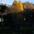 Photos: higashi05