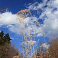 Photos: 冬の青空