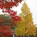 色づく公園