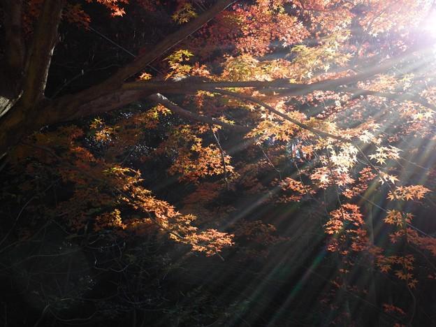 鎌倉散策 紅葉とレンブラント光