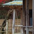 Photos: IMGP3480光市、伊藤公資料館、産湯の井戸4