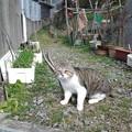 Photos: 長門市、鯨墓の猫