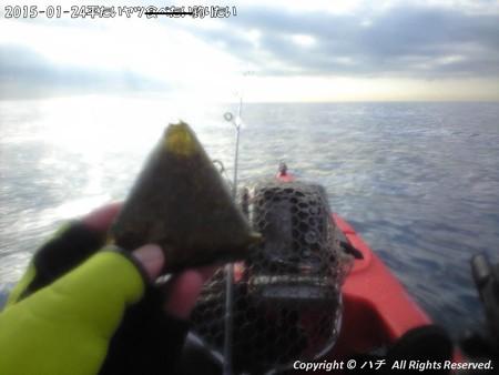 2015-01-24平たいヤツ食べたい釣りたい (7)