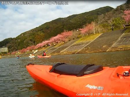 2015-02-21河津桜お花見ツーリングin南伊豆 (5)