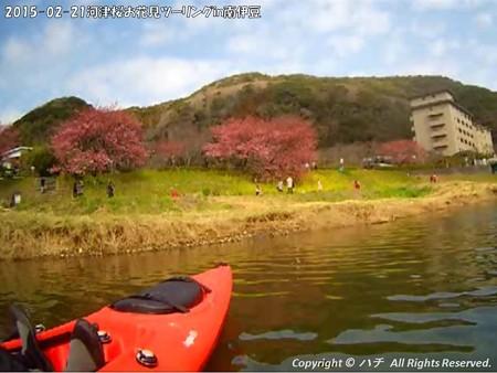 2015-02-21河津桜お花見ツーリングin南伊豆 (20)