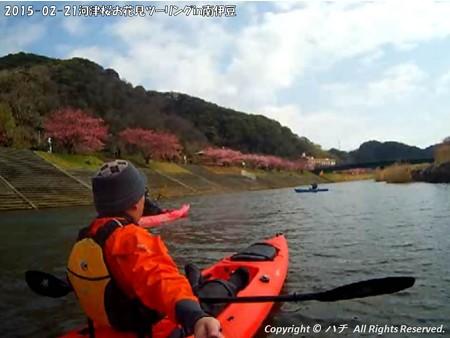 2015-02-21河津桜お花見ツーリングin南伊豆 (22)