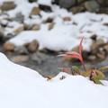 Photos: 雪の中で