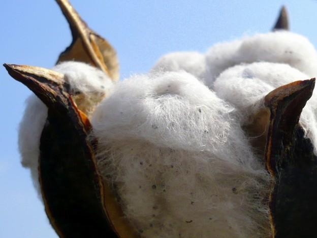 綿のベッド
