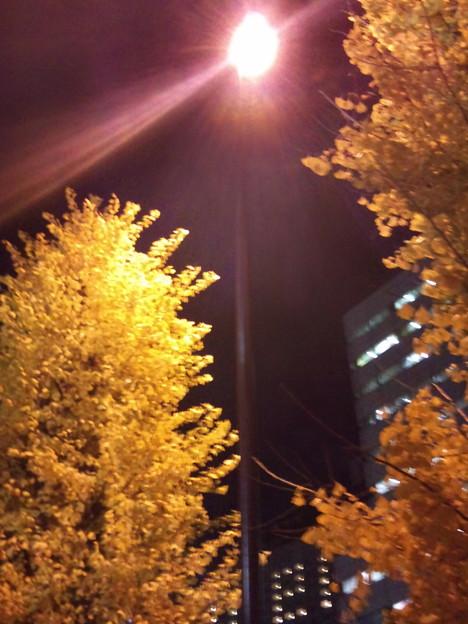 Photos: DSC_2729