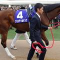 ジェンティルドンナ(4回中山8日 10R 第59回グランプリ 有馬記念(GI)出走馬)
