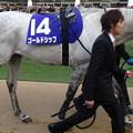 Photos: ゴールドシップ(4回中山8日 10R 第59回グランプリ 有馬記念(GI)出走馬)