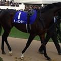 Photos: トーセンラー(4回中山8日 10R 第59回グランプリ 有馬記念(GI)出走馬)