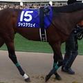 Photos: ジャスタウェイ(4回中山8日 10R 第59回グランプリ 有馬記念(G?)出走馬)