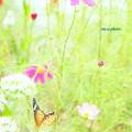 写真: 花から花へと