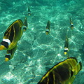 海中生物の写真