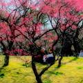 Photos: 春の歓び