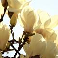 Photos: 咲き急ぐ