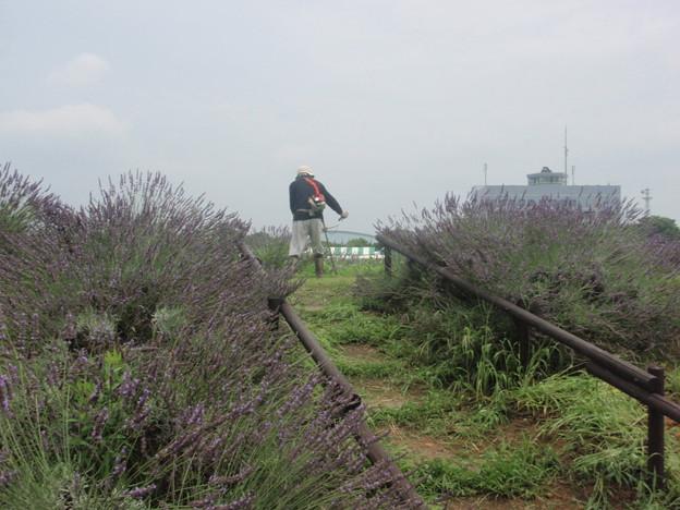 Photos: 草刈