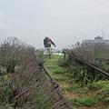 写真: 草刈