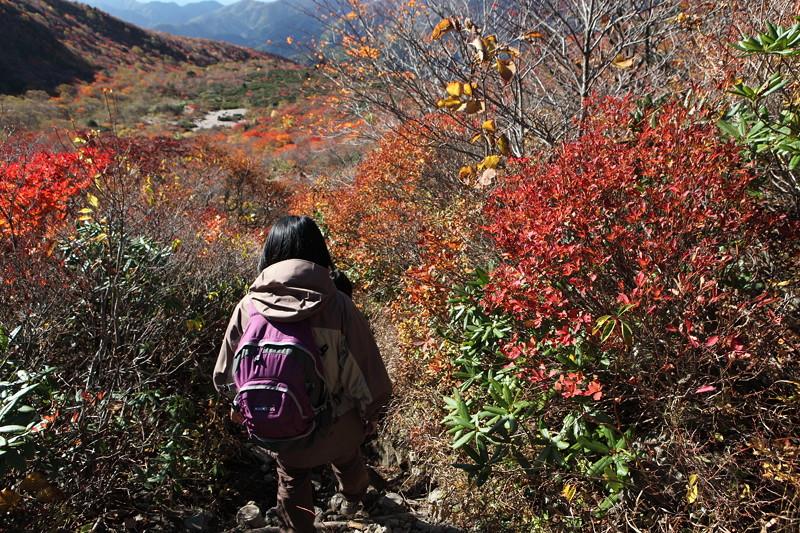 IMG_8906那須 茶臼岳 姥ヶ平の紅葉2