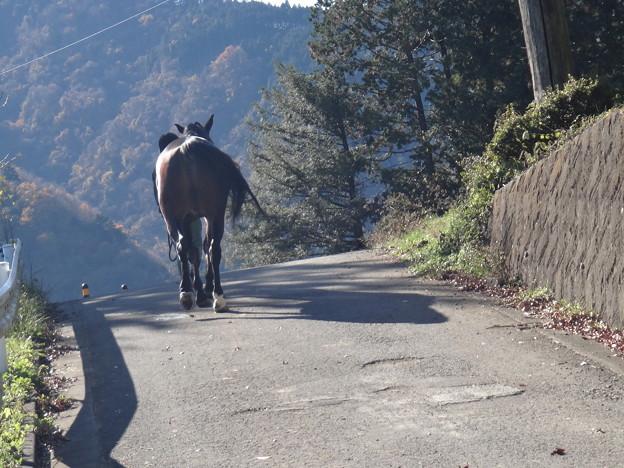 Photos: 路上の馬