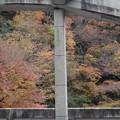 Photos: 箱根湯本の紅葉