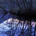 夕暮れの大正池
