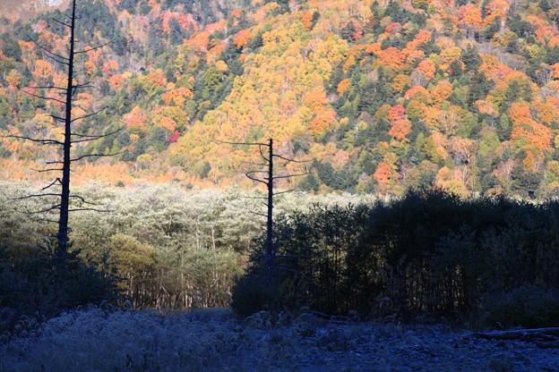 10月の上高地 紅葉