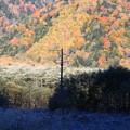 Photos: 10月の上高地 紅葉